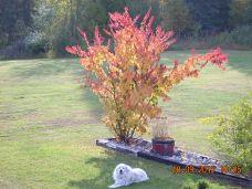 Atlas in fall colours