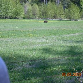 Bear in Hixon 2