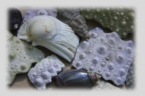 shellss1-300x199