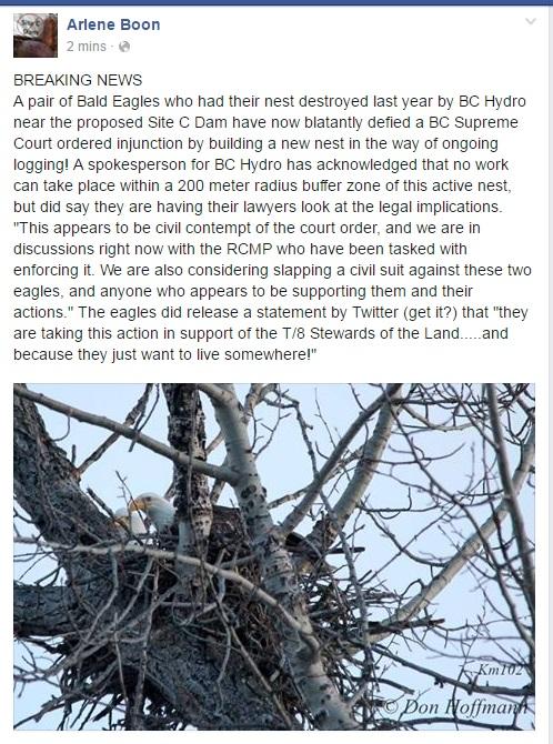 eagles break the injunction.
